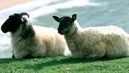 Schafe im irischen Donegal. © Tourismireland Imagery Foto: Nutan