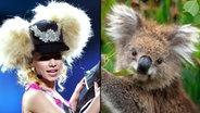 Zum Verwechseln ähnlich: Sängerin der Band 2B (links) und ein Koalabär (rechts). © picture alliance / Arco Images GmbH